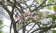 Floração das árvores chama atenção em Caruaru