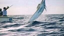 Grupo de pescadores encontra o marlim azul no mar da Bahia