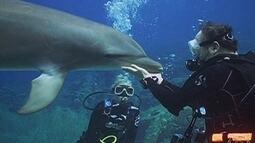 Equipe do Globo Mar mergulha com golfinhos no mar do Caribe