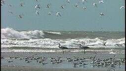 Lagoa do Peixe em Tavares, RS, é refúgio das aves migratórias