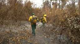 Mirante Rural mostra operação de combate a queimada no oeste do Maranhão