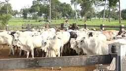 Veja os destaques do Mirante Rural deste domingo (8)