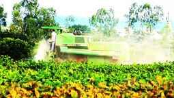 Com recessão, agricultores estão mais cautelosos no Maranhão