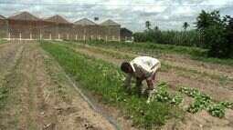 Produtores rurais reivindicam percentual mínimo para compra direta da agricultura familiar