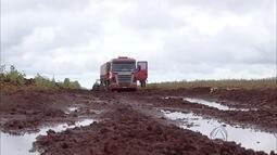 Sem ter como transportar, colheita de soja é interrompida em municípios de MS