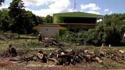 Moradores estão revoltados com o corte de árvores na 216 Sul