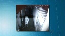 Comerciante diz que cadela de estimação foi agredida em MS