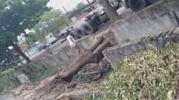 Moradora de Guarujá reclama de um tronco caído em um canal do bairro Vila Áurea
