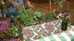 Veja dicas para montar uma horta em casa
