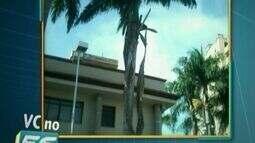 Moradores pedem poda de árvore no Centro de Cachoeiro, no Sul do ES