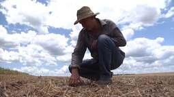 Assista ao programa Mirante Rural deste domingo (5)