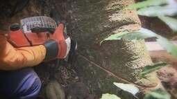 Descubra como o Brasil pretende ampliar concessão de florestas públicas para exploração