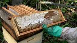 Apicultores fornecem mel para a merenda escolar do interior de Viana, ES