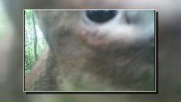Câmeras flagram animais silvestres
