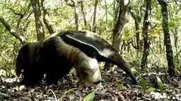 Animais do Parque Vassununga