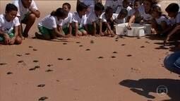 Crianças aprendem a preservar o meio ambiente com o Projeto Tamar na Bahia