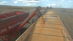 Valor do frete cai durante a safra de milho