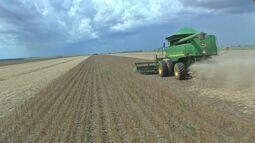 Aumento na produção de alimentos é tema do Momento Agro