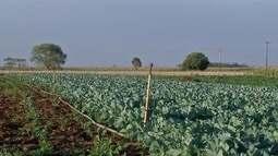 Pequenos agricultores comemoram resultados de programa com hortaliças no sul de MS