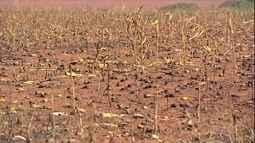 Queimadas destroem vegetação e lavouras no Norte e Centro-Oeste