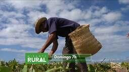 Domingo (31) é dia de Mirante Rural; veja os destaques do programa