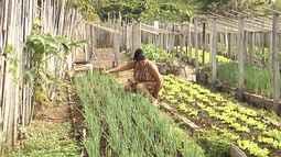 Veja o Mirante Rural deste domingo (31) na íntegra