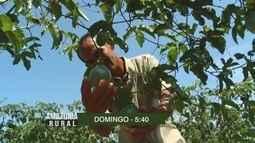Veja os pais que serão destaque no 'Amazônia Rural' deste domingo (14)