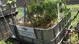 Sistema de aquaponia baixa custo de produção de hortaliças