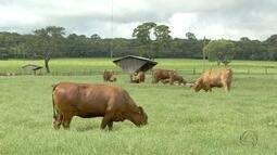ExpoMS discute estratégias para quem quer se destacar como produtor de carne