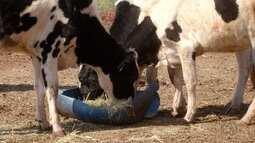 Zootecnista dá dicas para manter o peso do gado durante o inverno