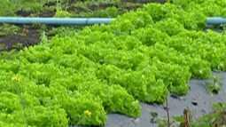 Frio provoca queda no preço das hortaliças no Alto Tietê