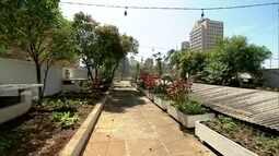 Galeria do Rock cultiva jardim e horta comunitária na sua cobertura