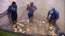 Criação de peixes registra aumento de mais de 50% em cinco anos no AM