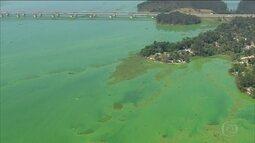 Água da Billings volta a ficar verde por causa da poluição