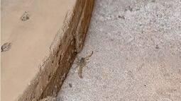 Tempo seco ajuda na proliferação de escorpiões