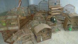 Aves são apreendidas em cativeiro irregular em Linhares, no ES