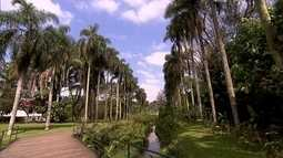 Jardim Botânico de São Paulo promove pesquisa, educação ambiental e preservação