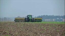 Produtores aumentam área ocupada com soja na safra de verão em MT