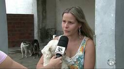 Auxiliar veterinária deixa emprego para cuidar de animais abandonados em Caruaru