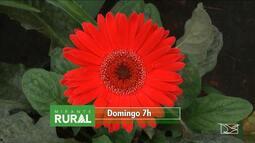 Veja os destaques do Mirante Rural deste domingo (9)