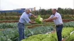 Projeto ajuda pequenos agricultores a produzirem com eficiência e qualidade no sul de MS