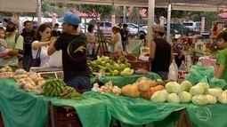 Pequenos produtores em Dourados usam tecnologia na produção de alimentos