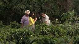Primavera traz esperanças a agricultores familiares que produzem café em Conquista