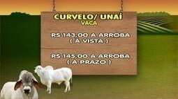 Confira valor da arroba do boi no cenário de seca