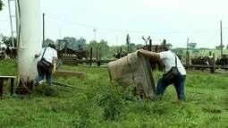 Perigo da dengue também está na zona rural