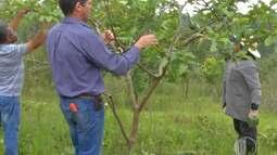 Curso em Suzano ensina técnicas de poda para árvores frutíferas.