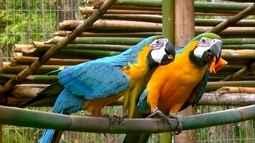 Projeto faz recuperação de aves em Araras