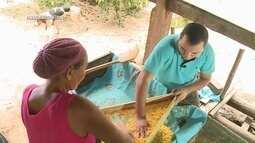 Parte 2: Acompanhe o processo artesanal da produção de farinha