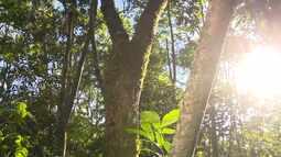A Natureza nos arredores de Antonina (parte 2)