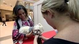 Reparo de roupas e cursos de moda movimentam mercado para animais de estimação